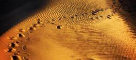 Footprints in the Gobi Desert by James Handlon