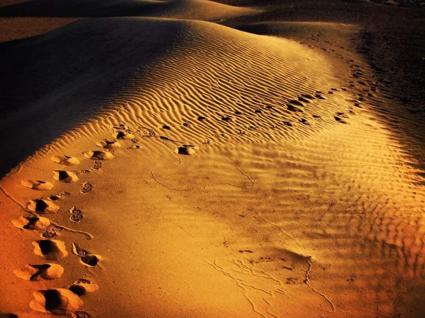 Footprints in the Gobi Desert by James Handlon