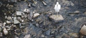 sea bird standing alone on a rock